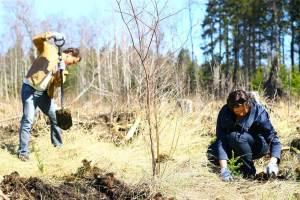 29. aprillil mindi oma esimest perioodi lõpetava Vabaühenduste Fondi eestvõtmisel metsa istutama. Kokku ajab Viimsis juured alla enam kui 1200 kuuseistikut. 2011 on pealegi Metsa-aasta!
